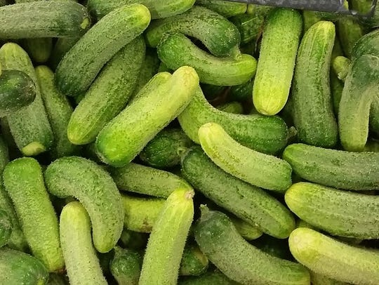 Kirby cucumbers are the most common home pickling cukes.
