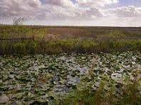 A large wetlands mitigation bank has been established off West Eau Gallie Boulevard west of Melbourne.