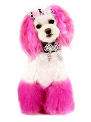 Stacey Whitmore wanted to dress Princess up in outfits, but when her husband Mark Roesler nixed the idea she got the idea of coloring the dog's hair.