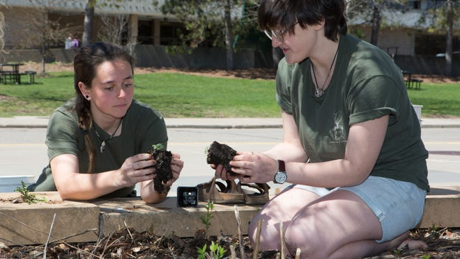 University of Wisconsin-Stevens Point Students for Sustainability Kelly Adlington, left, and Shelly Stein plant perennial seedlings near the Dreyfus University Center on Earth Day, April 22, 2016. The group planted, pruned and did bed maintenance in several areas around campus.
