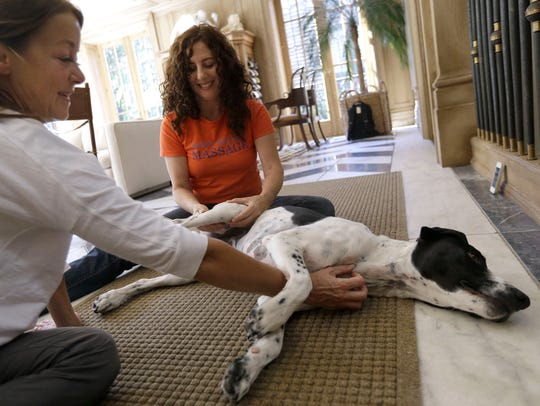 Practioners, such as Shelah Barr of Happy Hounds Massage
