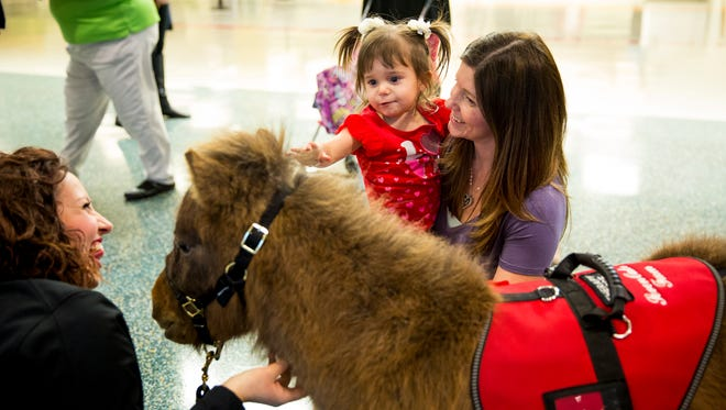 Brandy Duran, of Beavercreek, holds her daughter, Maya, 2, while she pets Harley, a miniature therapy horse, at the arrivals gate at Cincinnati/Northern Kentucky International Airport Tuesday, February 14, 2017.
