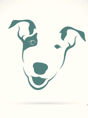 Image of a bull terrier