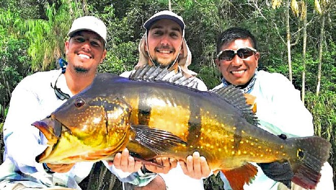 Marcel Griot, center, and his guides have reasons to be smiling. Griot is on his way to an International Game Fish Association (IGFA) All-Tackle (heaviest ever caught) World Record with this 30-pound 13-ounce speckled peacock bass he landed in Brazil's Marie River on Nov. 22. He was casting a High Roller Peacock-Series top-water plug. After weighing and documenting the catch, they released the fish. If approved the catch will replace a 29-pound 1-ounce catch.