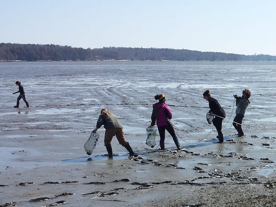 Students collect samples along a coastal Maine mud flat during the spring semester at Coastal Studies for Girls school near Freeport.