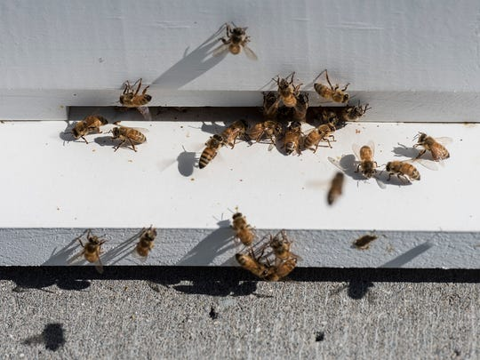 Bees enter and exit the hive during their workday.