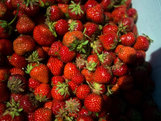 BUR 0630 strawberries C7