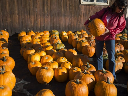 Fran Giroux picks out a pumpkin at Sam Mazza's Farm in Colchester in 2012. Yankee Magazine recommends Mazza's as a fall pumpkin pick-your-own destination in its fall issue.