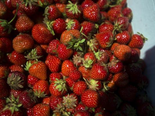 BUR 0630 strawberries C7