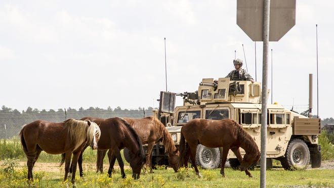 Horses graze near a soldier on security detail at the Joint Readiness Training Center at Fort Polk last month. The Army says the presence of the horses near training areas interferes with operations and endangers soldiers, and is looking at ways to remove them.
