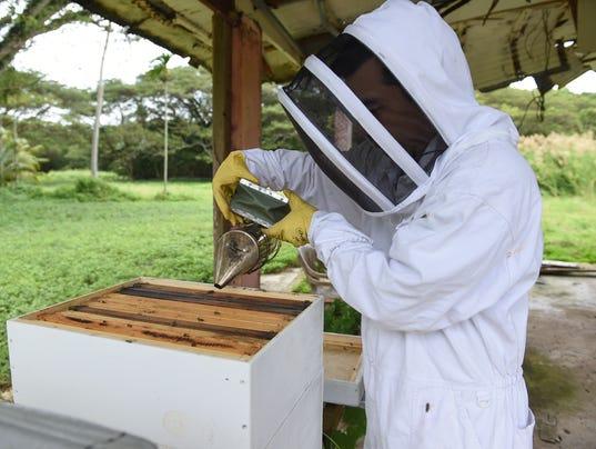 636501213959262780-bees-06.jpg