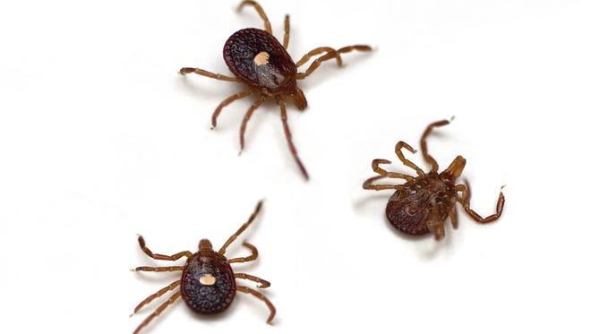 Evidence suggests that ticks and the diseases they carry are growing more common in Indiana.