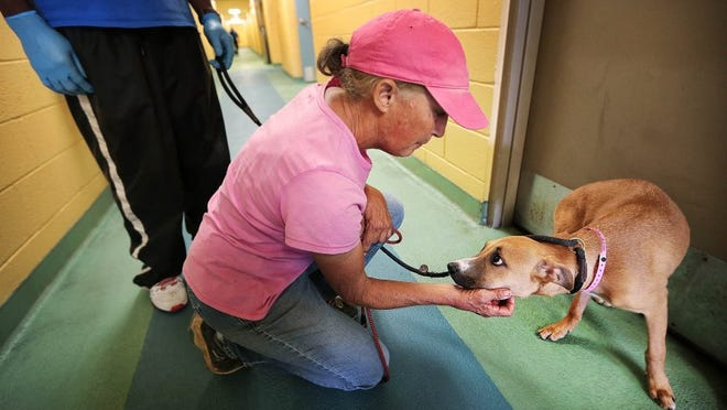 September 19, 2016 - Suzy Young with Meadow Wood Rescue adopts a 6-month-old puppy that was scheduled for euthanasia at the Memphis Animal Shelter. Memphis Animal Services Director Alexis Pugh announced a new system where Memphis Animal Services will no longer label and track breeds of animals in its shelter, possibly reducing breed-targeted euthanizations and preventing euthanizations because of mislabeling. (Jim Weber/The Commercial Appeal)