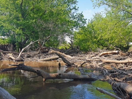 A massive log jam spans the width of the Pecatonica