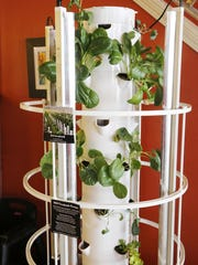 Green, leafy vegetables grow in a tower garden Wednesday, March 2, 2016, at Restauration, 731 Main Street in downtown Lafayette.