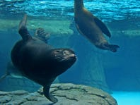 Win an Indianapolis Zoo Membership