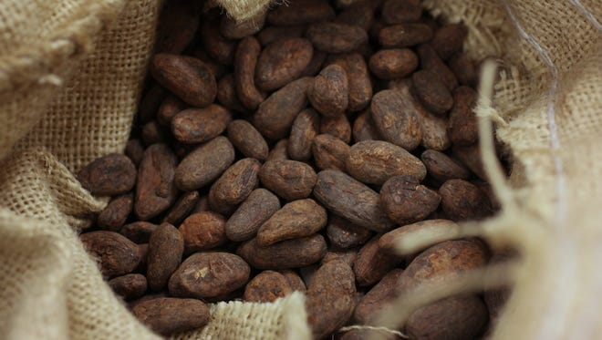 Chocolate makers start with cacao beans, such as the one pictured, to craft chocolate.