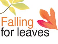 Falling For Leaves: Fun Projects To Do
