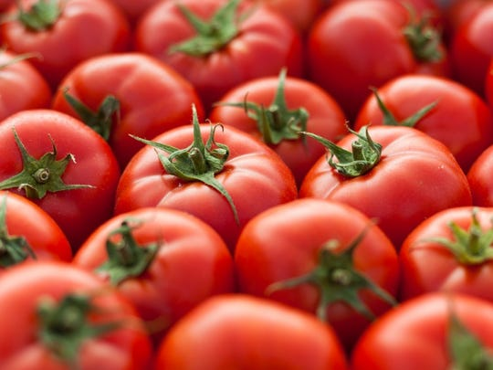 A quarter of tomatoes consumed in the United States, the largest tomato producer in the world, are eaten raw.