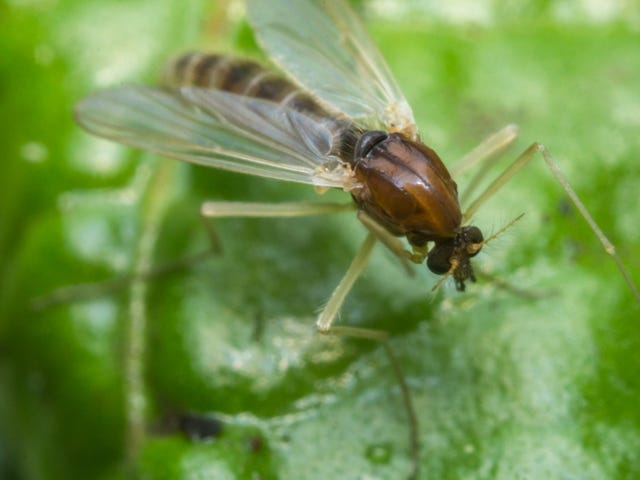 Fire ants, spiders, ticks: Dangerous summer bug bites to