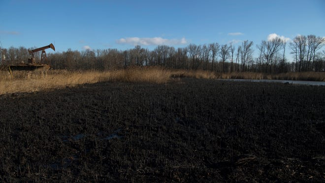 Charred remains of a field in a swampy area off Kentucky 136 and Klondike Road after an overnight fire burned through the Sloughs Wildlife Management Area Tuesday morning.