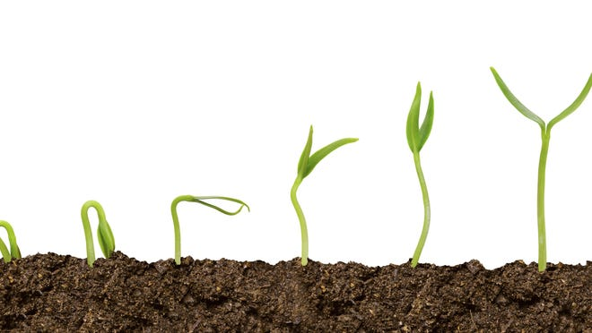 Spring is the perfect time to plant the seeds of change within ourselves.
