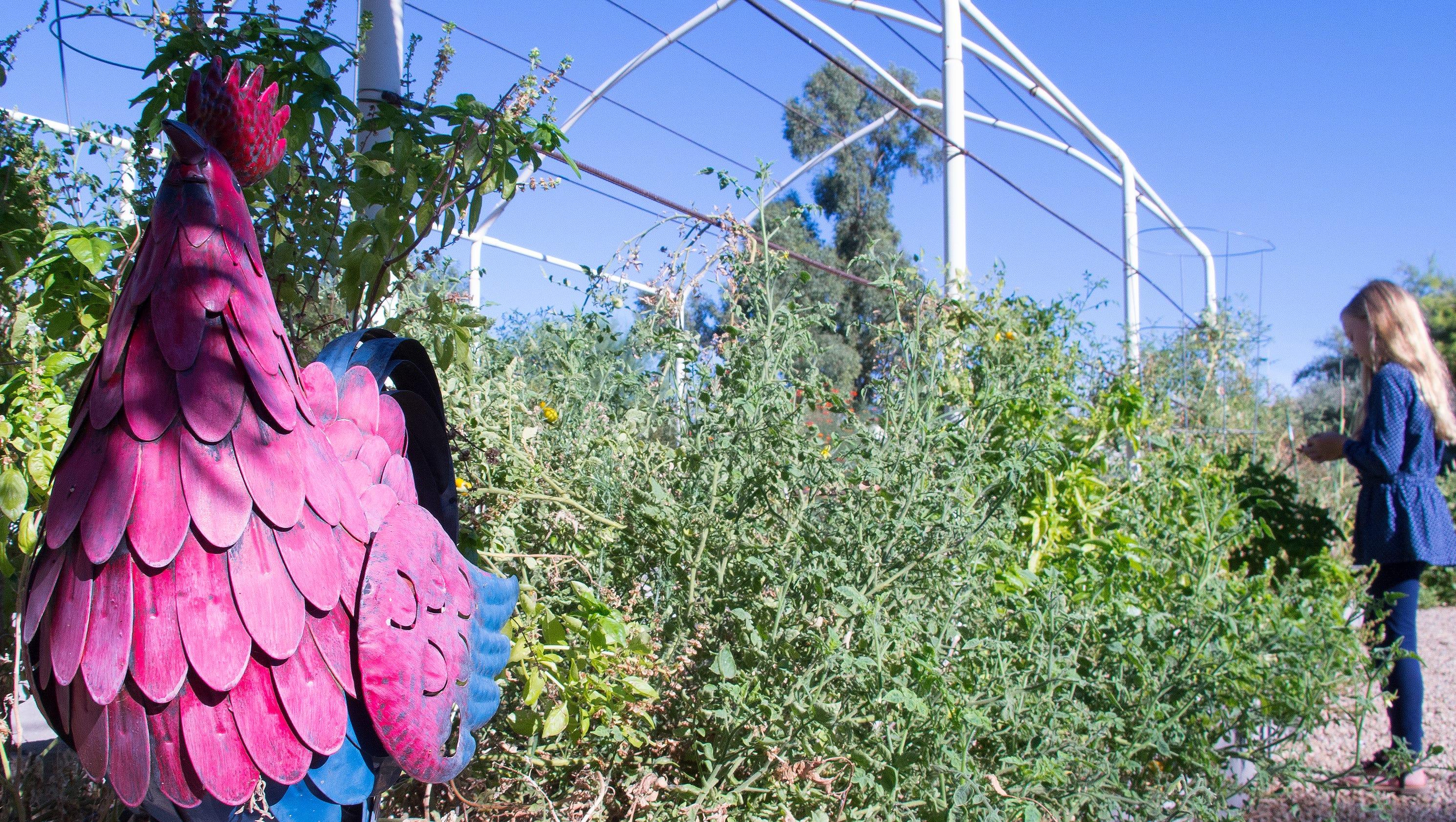Craigslist Santa Fe Farm And Garden - Garden Ideas ~ erikasmith.net