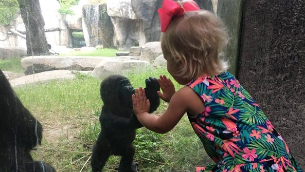 A sweet encounter between a young girl and a baby gorilla