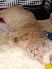 Spice is available for adoption atSun Cities 4 Paws,