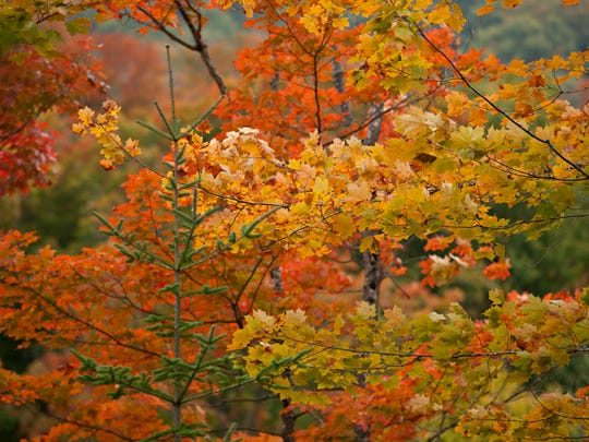 Fall colors are beginning to pop in the higher elevations of Caledonia County, as seen on Saturday, Sept. 20, 2014.