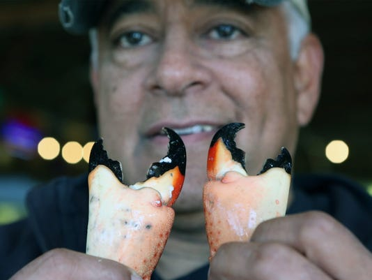 Where have the stone crabs gone?