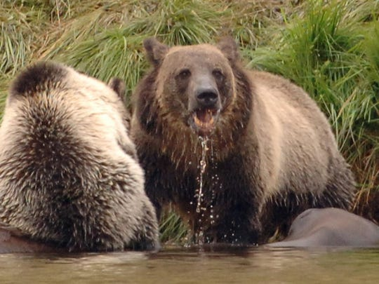 The state kicked off a two-day summit Wednesday for groups that educate the public about grizzly bears