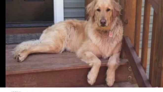 Allison Marks dropped her 2-year-old golden retriever off at a PETCO in Midlothian, Va., on Friday morning, ABC News reported. She says the dog died after being left in a drier.