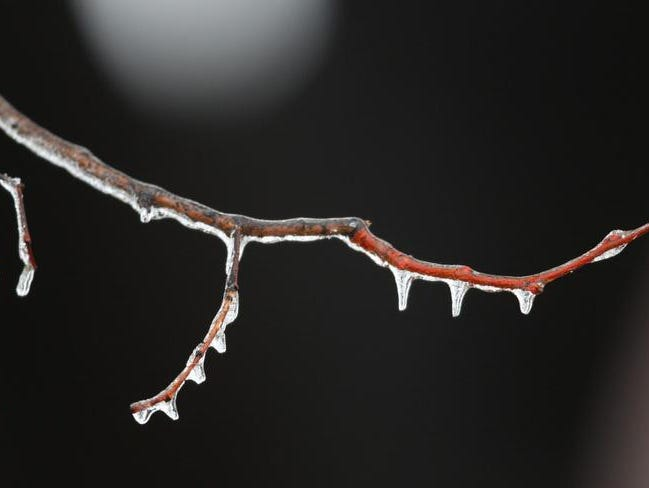 Ice covered trees on Sunday, knocking out power to more than 2,000 Rochester Gas & Electric customers on Sunday.