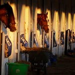 Horses are seen in their stalls after a morning workout at Churchill Downs Friday, May 1, 2015, in Louisville, Ky. (AP Photo/Jeff Roberson)