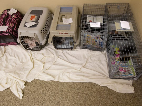 Cats recover after being spayed and neutered at Lee County Domestic Animal Services Friday.