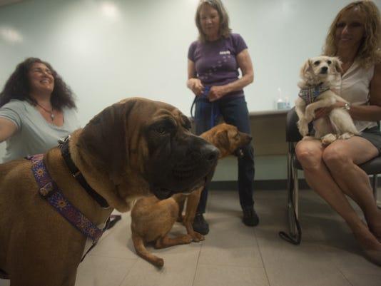 dog rescue update