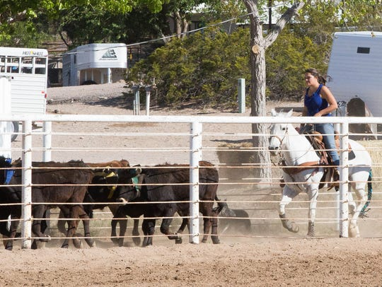 Morgan Hand, drives steers back to the starting gate