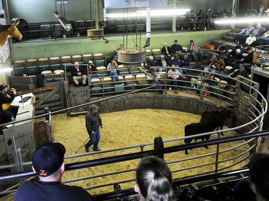 Auctioneer Jeff Showalter calls out while two calves are shown during a cattle auction at the Staunton Union Stockyard on Thursday, April 27, 2014, in Staunton.