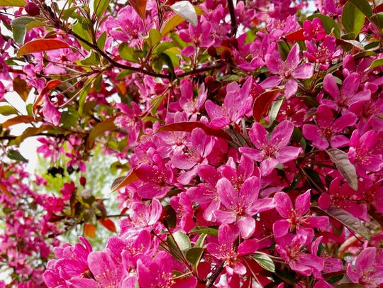 Spring is the best time to plant fruit trees such as