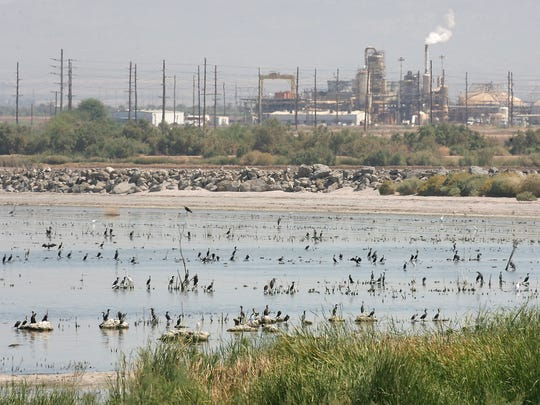 Thousands of birds use the Sonny Bono National Wildlife Refuge near a geothermal power plant by the Salton Sea on Sept. 18, 2012.