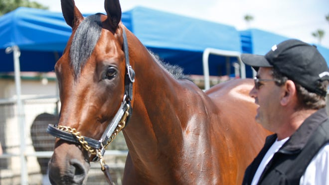 Triple Crown champion American Pharaoh  stands quietly for the media with assistant trainer Jim Barnes in the stables of the Del Mar Thoroughbred Club Tuesday, July 14, 2015, in Del Mar, Ca. .  (AP Photo/Lenny Ignelzi)
