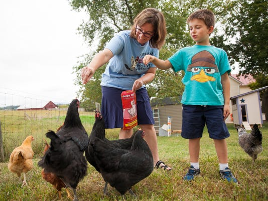 Backyard Chickens And Flies backyard chickens to fly again in augusta county