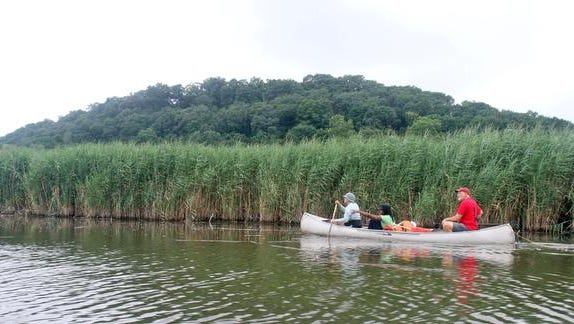 Scientists from Columbia University?s Lamont-Doherty Earth Observatory paddle through the Piermont Marsh in August as they monitor the impact of construction upriver at the Tappan Zee Bridge.