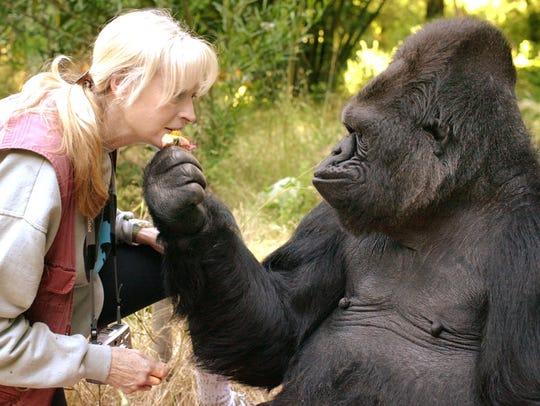 Koko and her Lifelong Teacher and Friend, Dr. Penny
