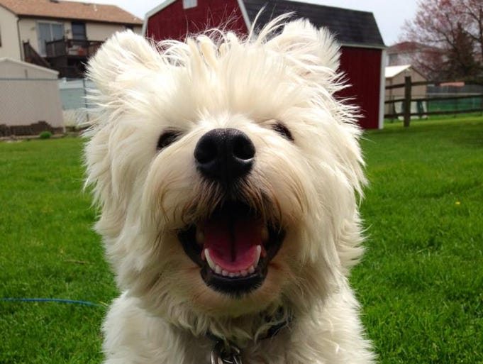 Dogs of WNY: Celebrating National Dog Day!