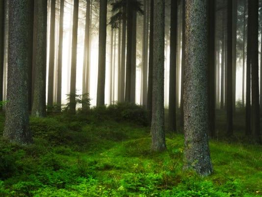 635993491535434993-forest.jpg