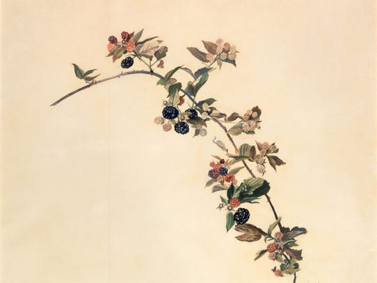 Andrew Wyeth's watercolor of a blackberry branch, a