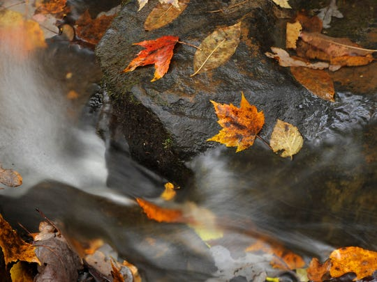 Fall leaves line the rocks of the Fall Creek at Fall Creek Falls State Park.