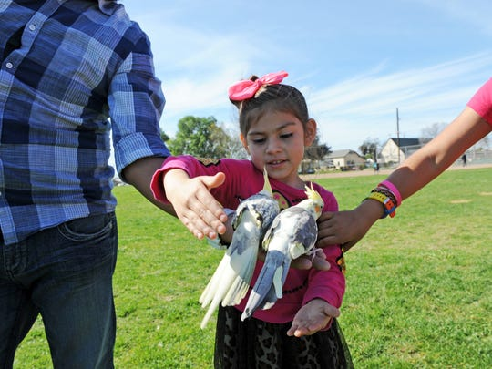 Young Angelina Arellano, 5, helps take care of cockatoos Pikachu and Tutti in Closter Park.